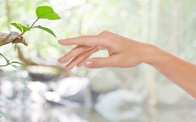 Rebirthing (újjászületés) tréning